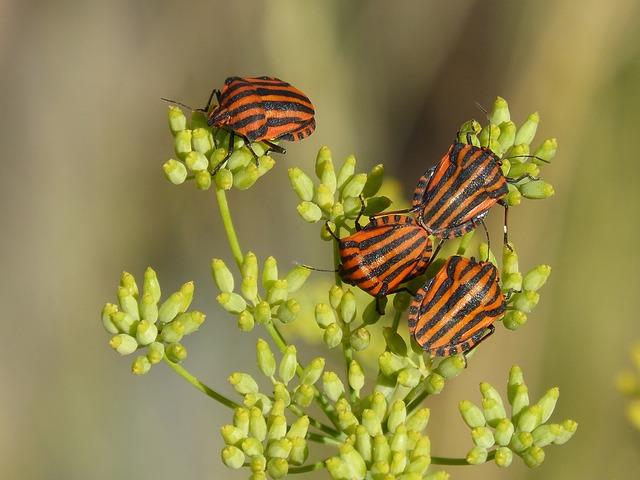 domowe insekty